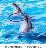 Dolphin Spinning Hoop In The...