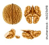walnut nut with shell  vector... | Shutterstock .eps vector #46325698
