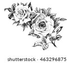 Stock photo hand drawn garden rose flower isolated on white background 463296875