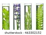 laboratory  fern  lavender ... | Shutterstock . vector #463302152
