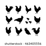 set of vector rooster and...