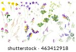 collection of meadow flowers.... | Shutterstock . vector #463412918