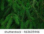 image of fluffy fir needle as...   Shutterstock . vector #463635446