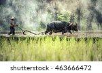 rice farming with buffalo | Shutterstock . vector #463666472