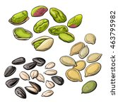 collection of pistachio ... | Shutterstock .eps vector #463795982