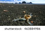Close Up Of A Dead Crab At A...
