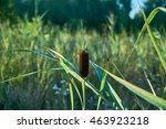 green plants growing in the... | Shutterstock . vector #463923218
