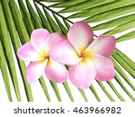 pink frangipani blooms on palm... | Shutterstock . vector #463966982