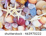 Small photo of Starfish on seashells background