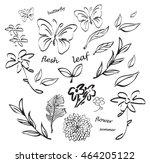 hand drawn fresh leaves ...   Shutterstock .eps vector #464205122