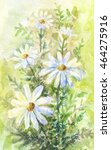 chamomile watercolor painting....   Shutterstock . vector #464275916