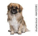 teckel spaniel  3 years old ... | Shutterstock . vector #46432081