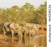 Small photo of african bush elephant drinking in the riverbank,, kruger park