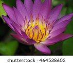 purple lotus | Shutterstock . vector #464538602
