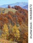 Colorful Trees On Slope And...