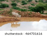 Cow Standing On Red Earth Near...