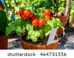 Lovely Small Cherry Tomato...