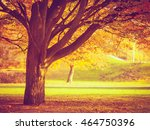 nature outdoor foliage season... | Shutterstock . vector #464750396