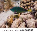 parrot fish swimming underwater ... | Shutterstock . vector #464948132