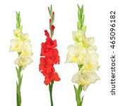 Yellow And Red Gladiolus...