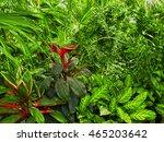 botanical garden in summertime | Shutterstock . vector #465203642