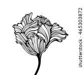 Head Of Tulip. Black Ink...