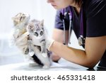 young female veterinary doctor... | Shutterstock . vector #465331418