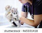 young female veterinary doctor... | Shutterstock . vector #465331418