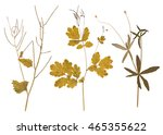 set of wild dry pressed flowers ... | Shutterstock . vector #465355622