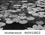 Lotus Leaves In Black And White