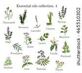 set of essential oil plants ... | Shutterstock .eps vector #465510302