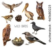 illustration of different birds ... | Shutterstock . vector #465680225