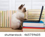 Stock photo siamese kitten with blue eyes sitting at a miniature laptop computer stacked on books with books in 465759605