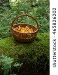 mushrooms chanterelle.... | Shutterstock . vector #465826202