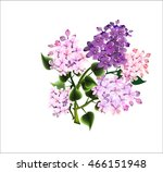lilac | Shutterstock .eps vector #466151948