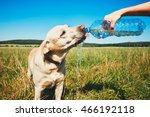 Hot Day With Dog. Thirsty...