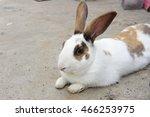 the rabbit in the wild nature | Shutterstock . vector #466253975