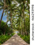Walkway To Famous South Beach ...