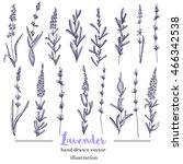 vector lavender hand drawn... | Shutterstock .eps vector #466342538