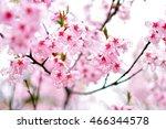 sakura | Shutterstock . vector #466344578