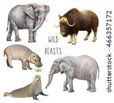 illustration of large wild... | Shutterstock . vector #466357172
