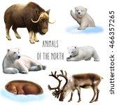 Illustration Of Large Wild...