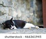 black white domestic cat lying... | Shutterstock . vector #466361945