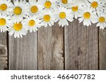 daisy chamomile flowers on... | Shutterstock . vector #466407782