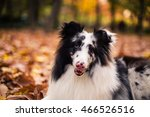 Awesome Dog In Autumn Season