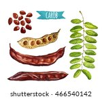Carob  Hand Painted Watercolor...