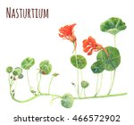 Nasturtium  Orange  Red Flower...