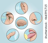 a set of six anatomical images. ...   Shutterstock .eps vector #466591715