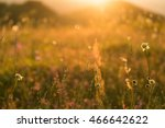 flower. glade with flowers .... | Shutterstock . vector #466642622