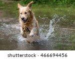Dog Breed Golden Retriever...